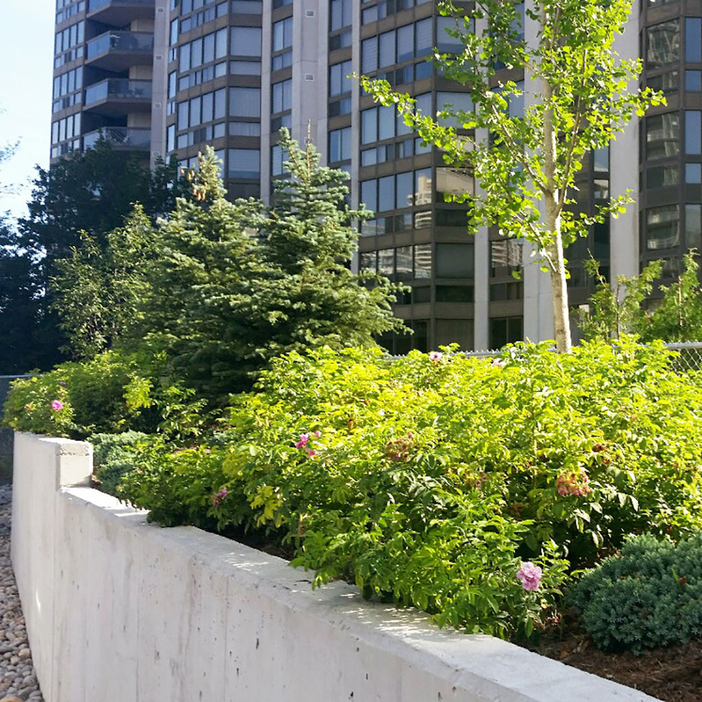 Concrete retaining wall containing dense plant life and a few conifer trees