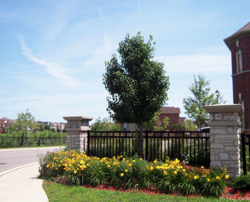 A small tree sits in the middle of a planter bed with yellow lilies in front of a stone pillared metal fence