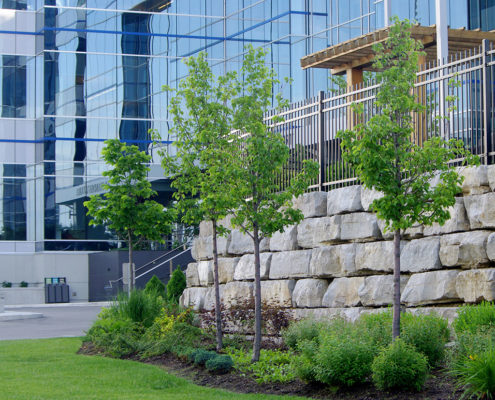planting garden with small shrubs and trees in front of a story high armor stone retaining wall capped with iron fence