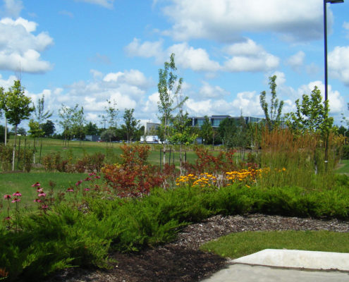 Bioswale with small shrubs and plants at Speakman drive