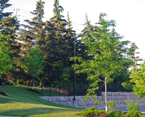 Old growth trees on top of retaining wall overlooking the parking lot