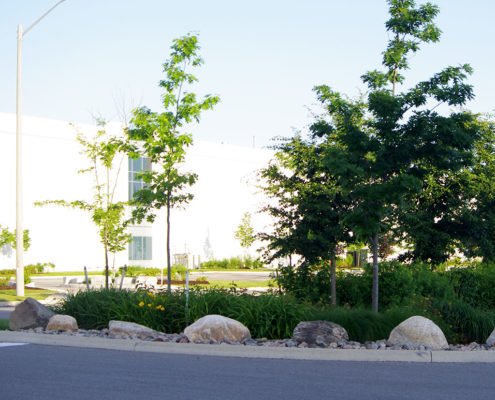Armor stone surrounds the low shrubs and trees in this roadside planting bed