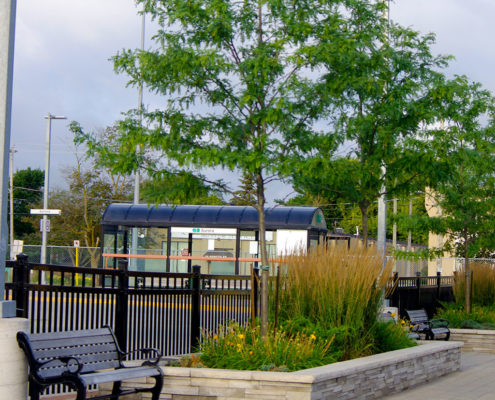 Ornamental grass and a small tree in a stone walled planter bed on the sidewalk at the Aurora Go Station