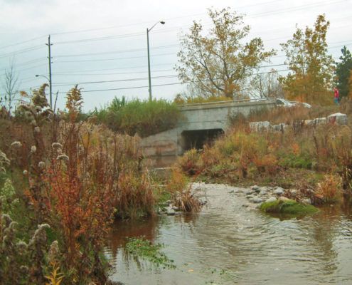 Tuck creek flowing under a bridge with native plant species around the banks