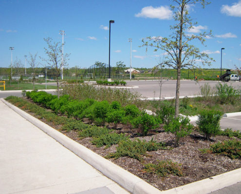 Island plant bed in parking lot at Sixteen Mile Creek with small shrubs