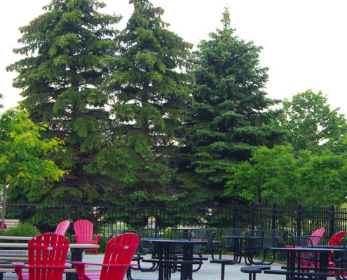 Tall conifer trees shield the outdoor seating area from the roadway