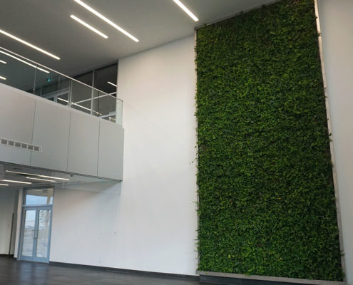 Green living wall with plants in the lobby of the Mississauga Gateway buildings