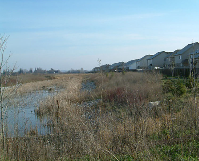 Large weyland with local plant species beyond the backyards of homes in a subdivision
