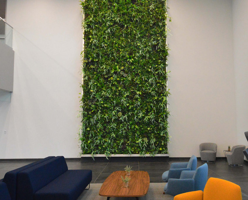 Green Wall in shared lobby with yellow and blue chairs and a blue couch