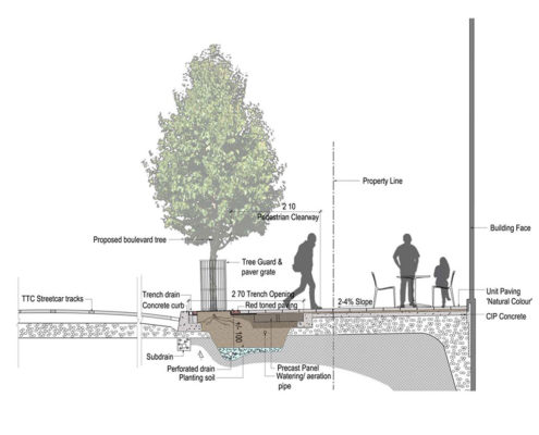 rendering of the tree vault to accommodate for a larger soil volume and improved overall tree health