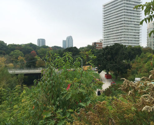 Existing vegetation overlooking Sir Winston Churchill park with condo buildings off in the distance
