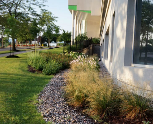 A mulch garden with ornamental grass is bordered with small stones in front of the windows of the office building