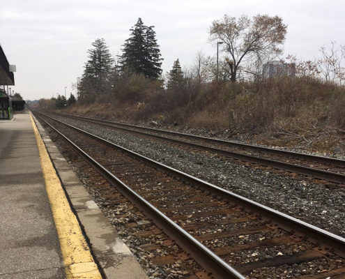 Natural growth along tracks at Cooksville Go Station
