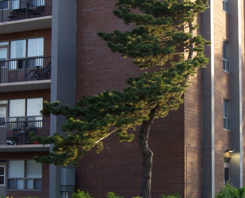 Existing tree planted with new shrubs along side the building at 1867 Bloor Street West