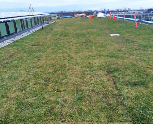 Sods laid on green roof at Humber College Barrett Centre with the city skyline in the background