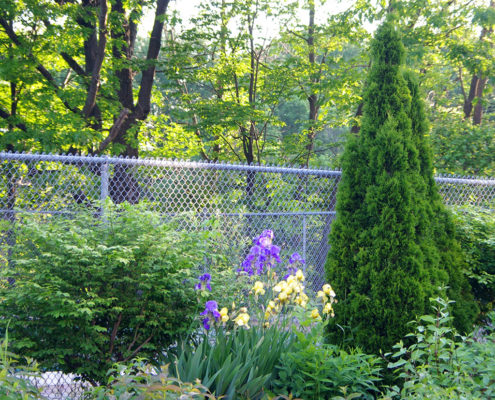 Small shrubs in plants are planted along a decorative fence