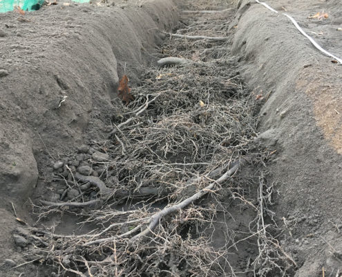 1 foot deep by 2 feet wide trench exposing the roots of existing trees to perform a root investigation