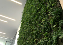 Green living wall with various plants in the lobby of these two buildings